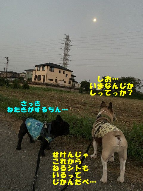 IMG_4365(1).jpg