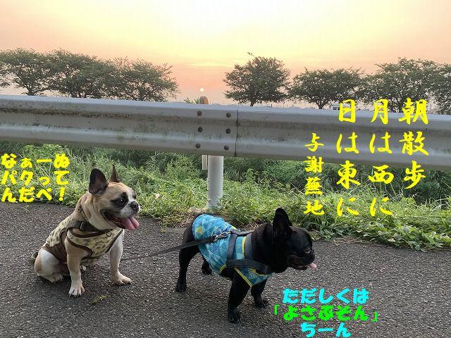 IMG_4386(1).jpg