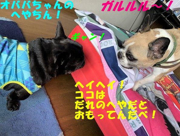 IMG_4426(1).jpg