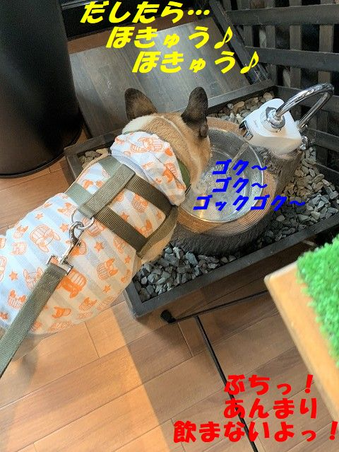 IMG_4813(1).jpg