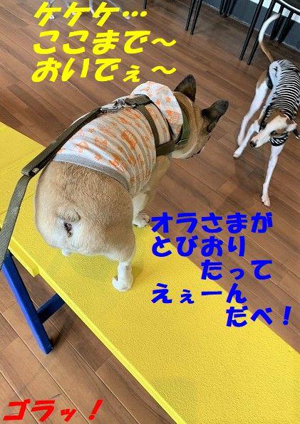IMG_4880(1).jpg
