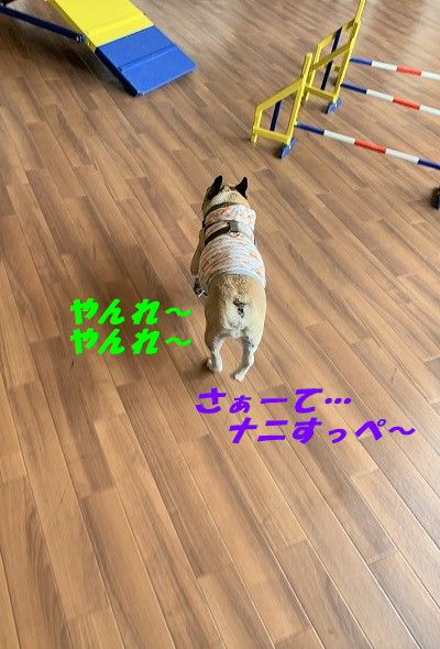 IMG_4892(1).jpg