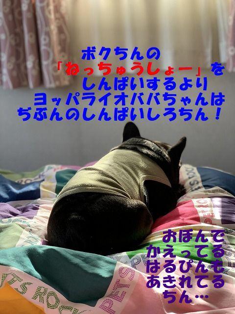 akiresio.jpg