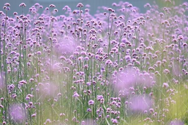 初夏のお花畑