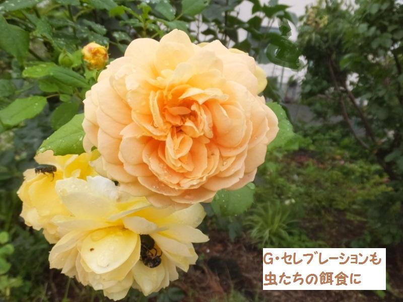 DSCF4889_1.jpg