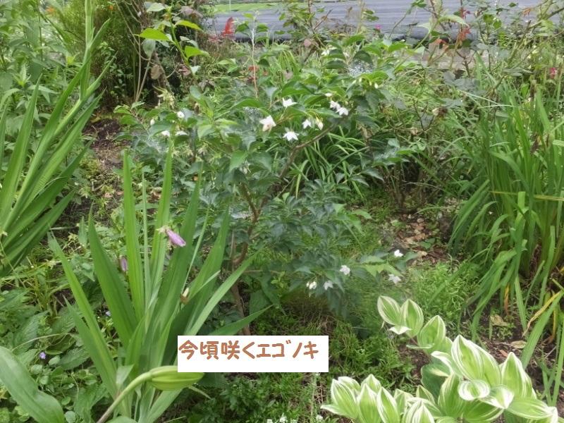 DSCF4942_1.jpg