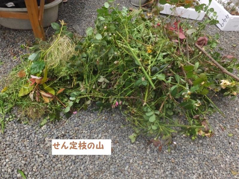 DSCF5077_1.jpg