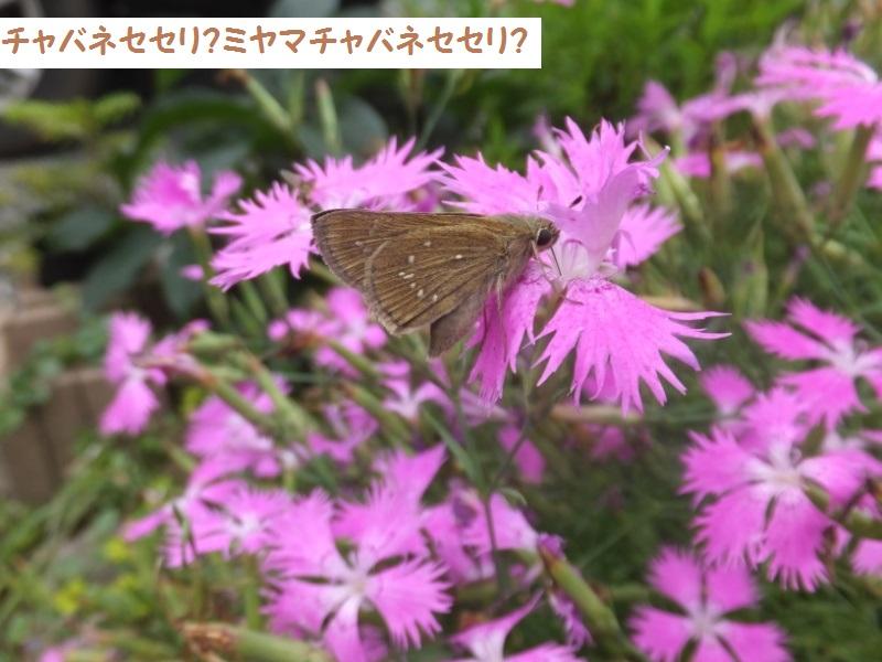 DSCF5131_1.jpg