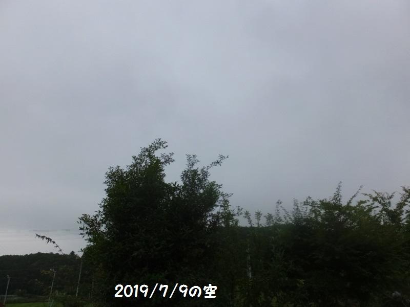 DSCF5145_1_20190710092842d46.jpg