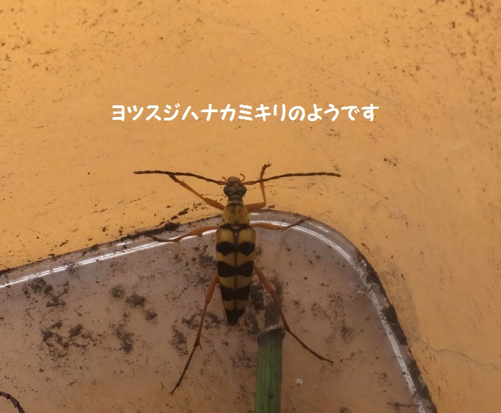 DSCF5201-1_1.jpg