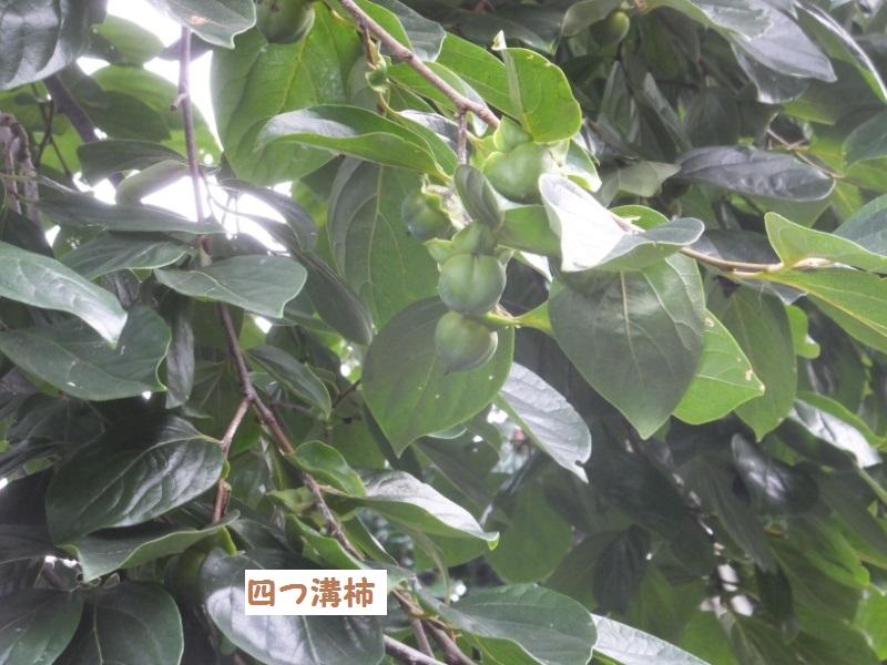 DSCF5390_1.jpg