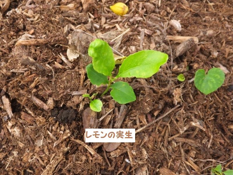DSCF5438_1.jpg