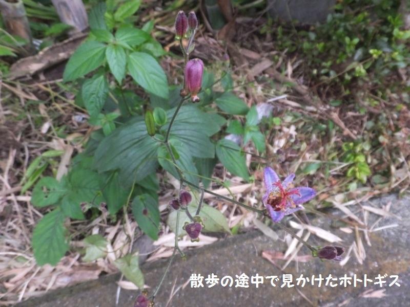 DSCF5442_1.jpg