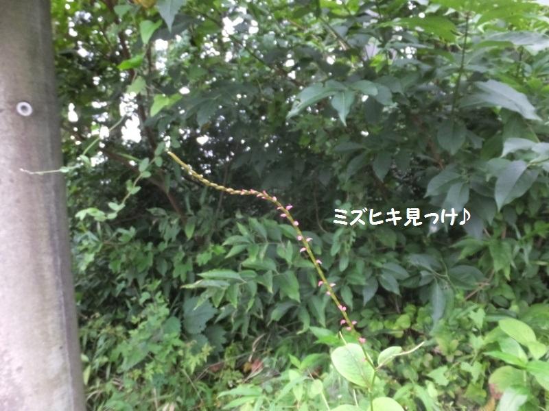 DSCF5443_1.jpg