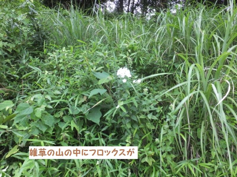 DSCF5445_1.jpg