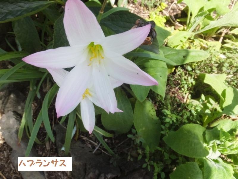 DSCF5614_1.jpg