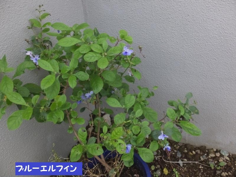 DSCF5665_1.jpg