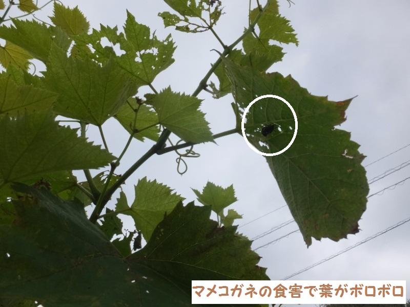 DSCF5674_1_201907291513272fa.jpg
