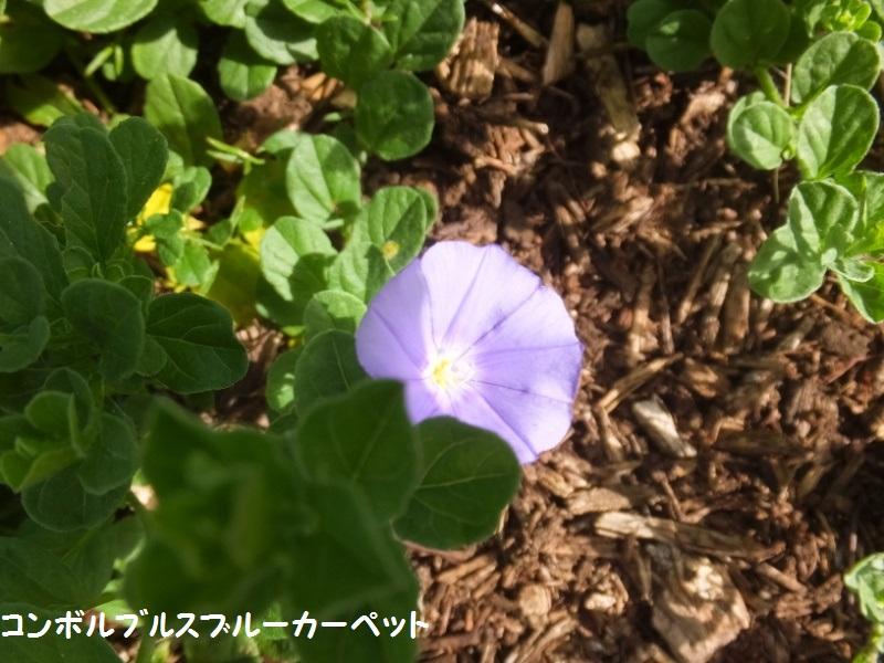DSCF5808_1.jpg