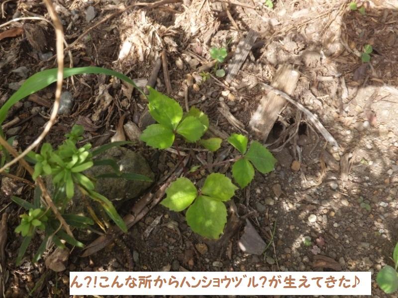 DSCF5814_1.jpg