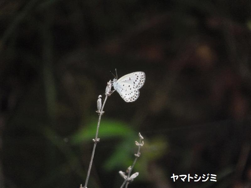 DSCF5915_1.jpg