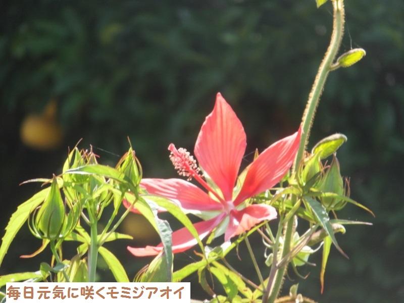 DSCF5927_1.jpg