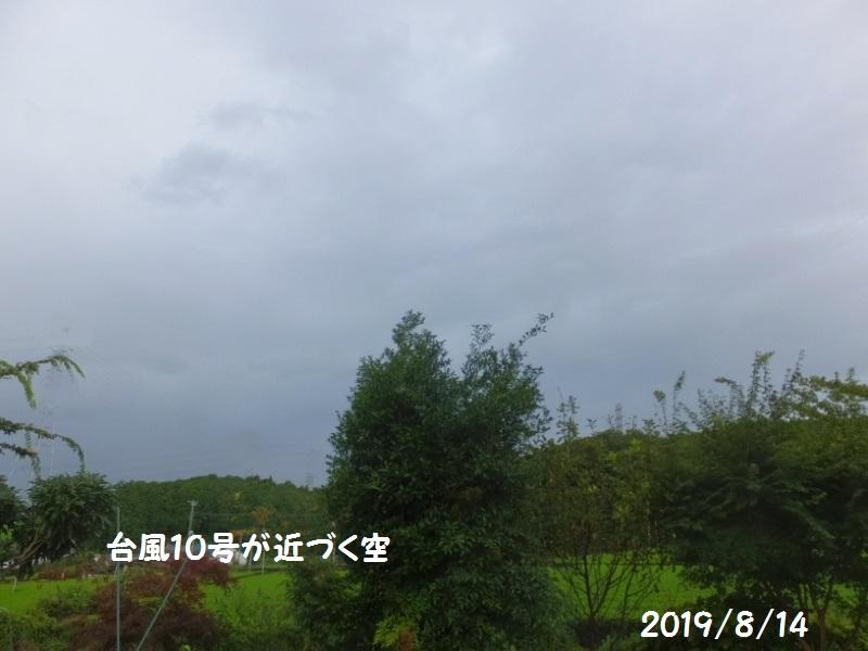 DSCF6021_1_20190815075249e98.jpg