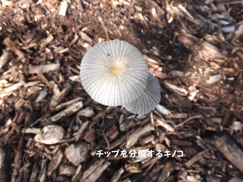 DSCF6272_1.jpg