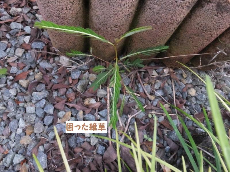 DSCF6302_1.jpg
