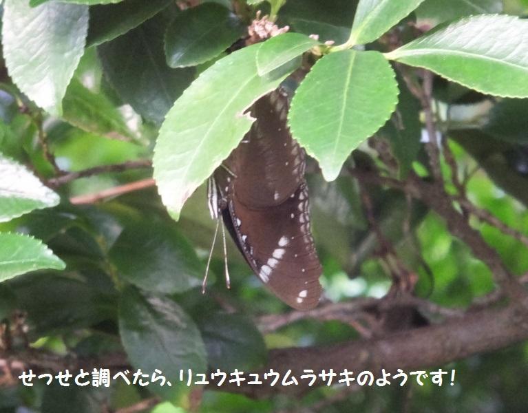 DSCF6431-1_1.jpg