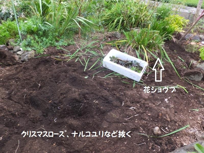 DSCF7213_1.jpg