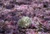 平成31年4月の花
