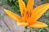 令和元年8月お花