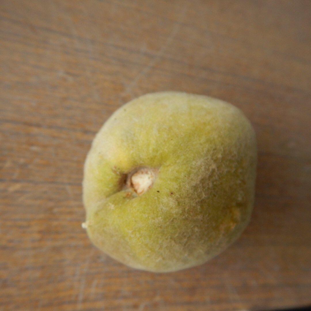 peach_1.jpg