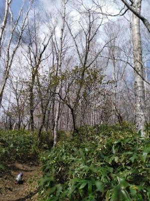 沼原湿原 キャバマル