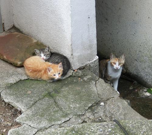 11日、ネコ発見っ! その2。
