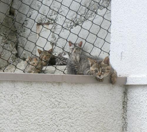 11日、ネコ発見っ! その1。