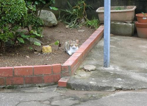 19日の、猫発見! その2!