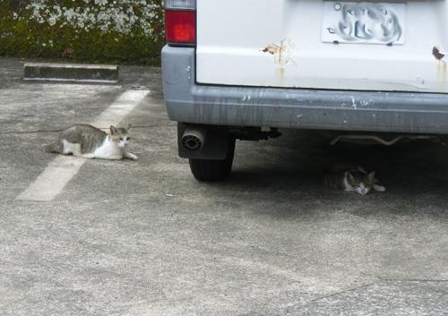 19日の、猫発見! その1!