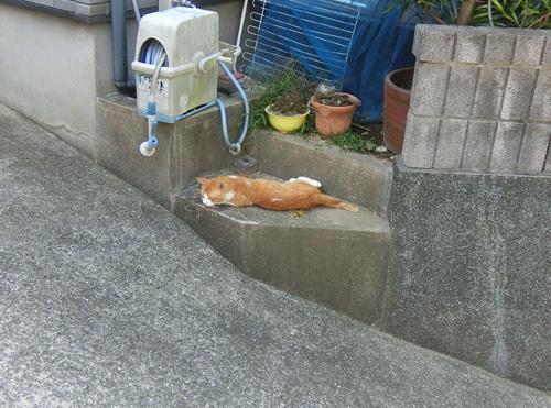 17日の、ネコ発見。