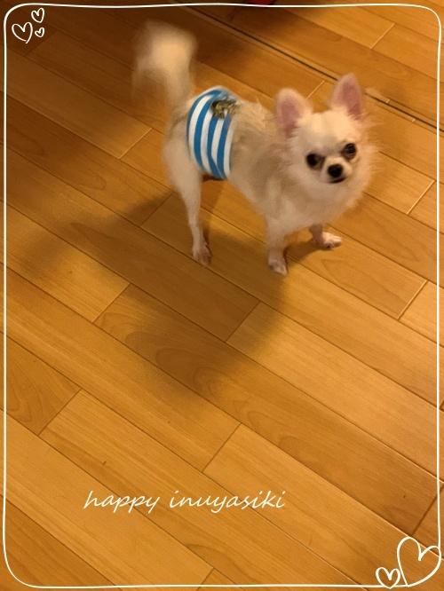 mini2019IMG_5279 (編集済み)