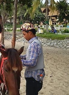 ビーチで馬と (1)