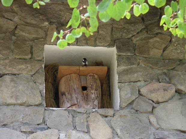 シジュウカラと丸太の巣箱