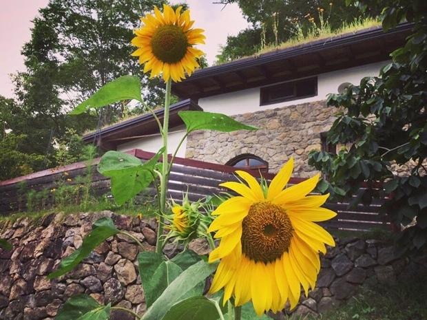 ヒマワリは夏の花