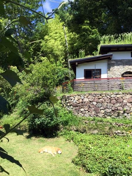 日干し犬と草屋根ボーボー