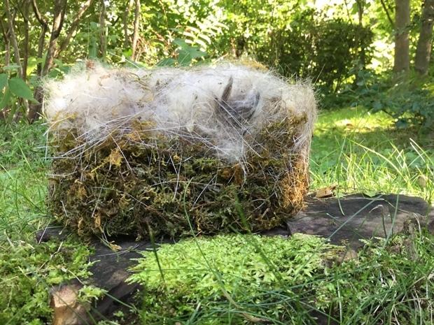 シフォンケーキみたいな小鳥の巣
