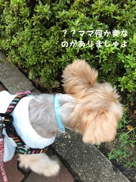 きのこ2 (2)