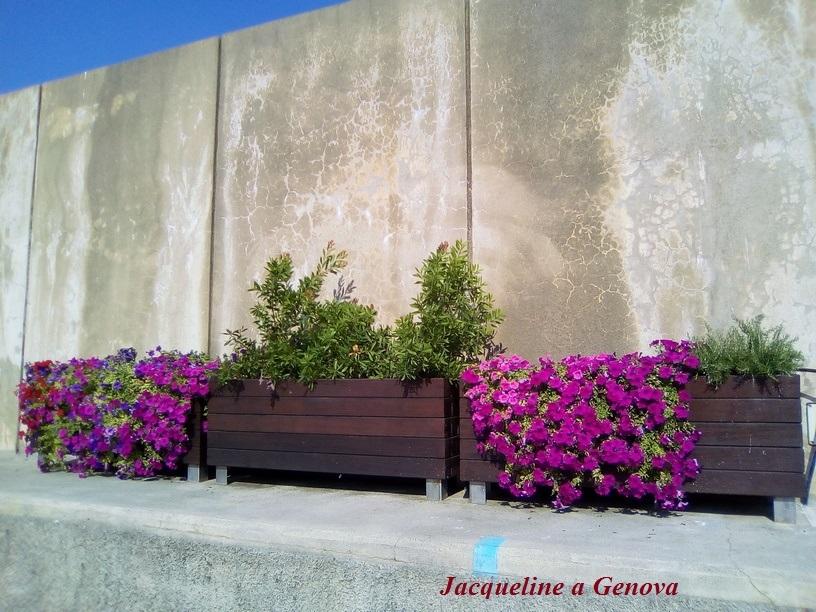 planter_al_porto190826