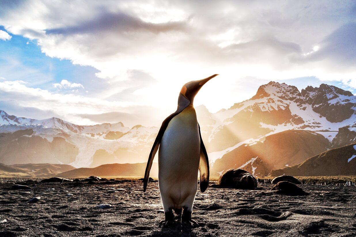 見出し画像 ペンギン 朝日 本当にあったSAN値が下がるクトゥルフ BGB Photo by Ian Parker on Unsplash