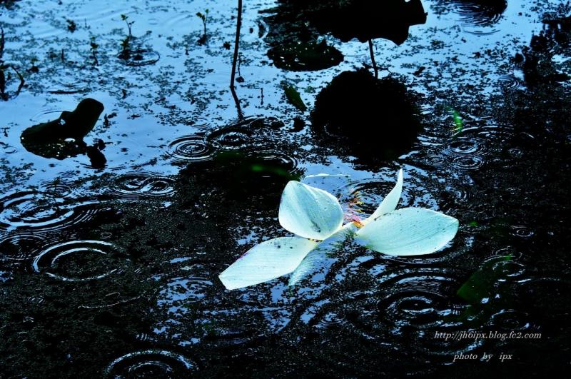 雨の日(blog)